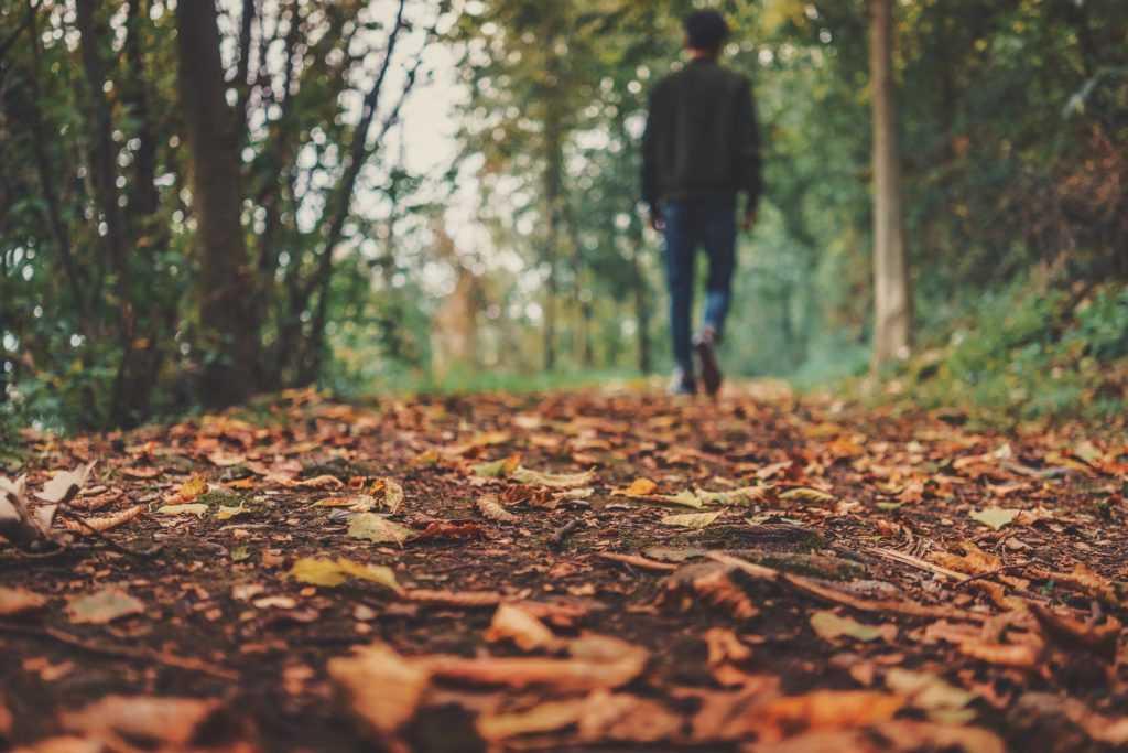 מכללת כרכור | מהם הגורמים העיקריים לזיהום הקרקע - ומה ניתן לעשות בנידון