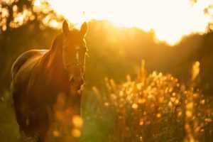 מכללת כרכור | הקשר בין גוף נפש וסוסים, מקצוע בעתיד כבר כאן