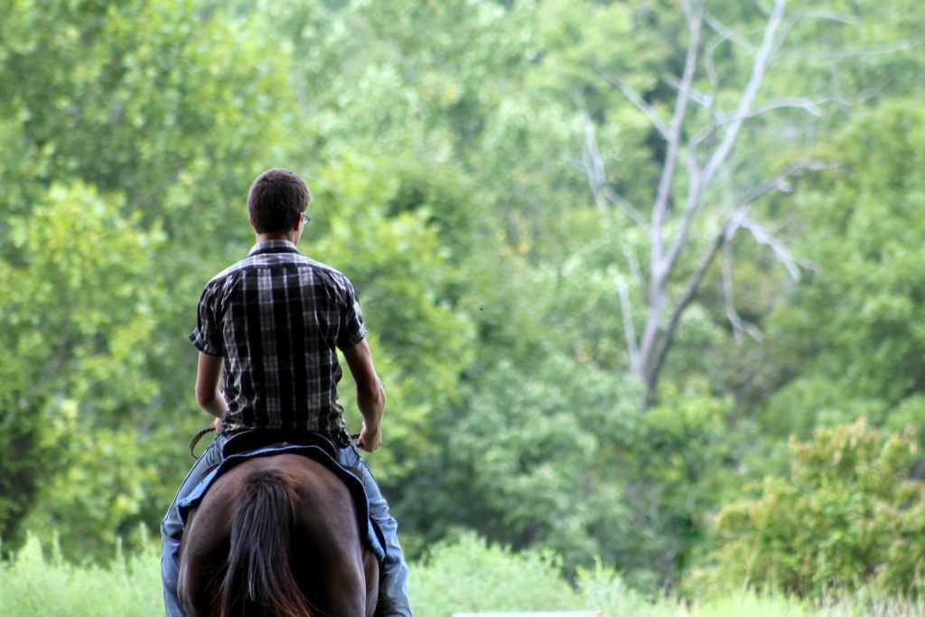 מכללת כרכור | תרפיה בעזרת סוסים עם דגשים על נוער בסיכון