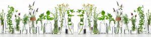 לימודי הרבליסט קליני | לימודי צמחי מרפא - מכללת כרכור, קריירה מרתקת ומלאת עניין