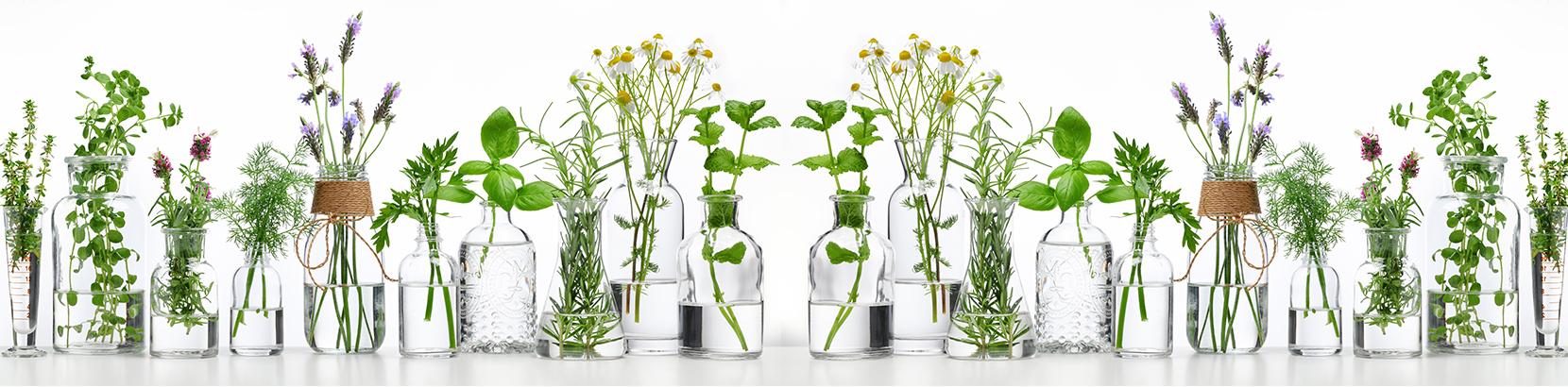 צמחי מרפא הינם תחום המתפתח כיום בעולם