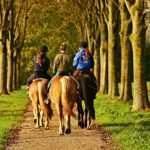 מכללת כרכור   סוס כשותף לריפוי. מגוון מסלולי טיפול אלטרנטיביים