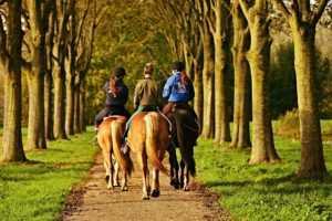 מכללת כרכור | סוס כשותף לריפוי. מגוון מסלולי טיפול אלטרנטיביים