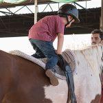 Horses_x628