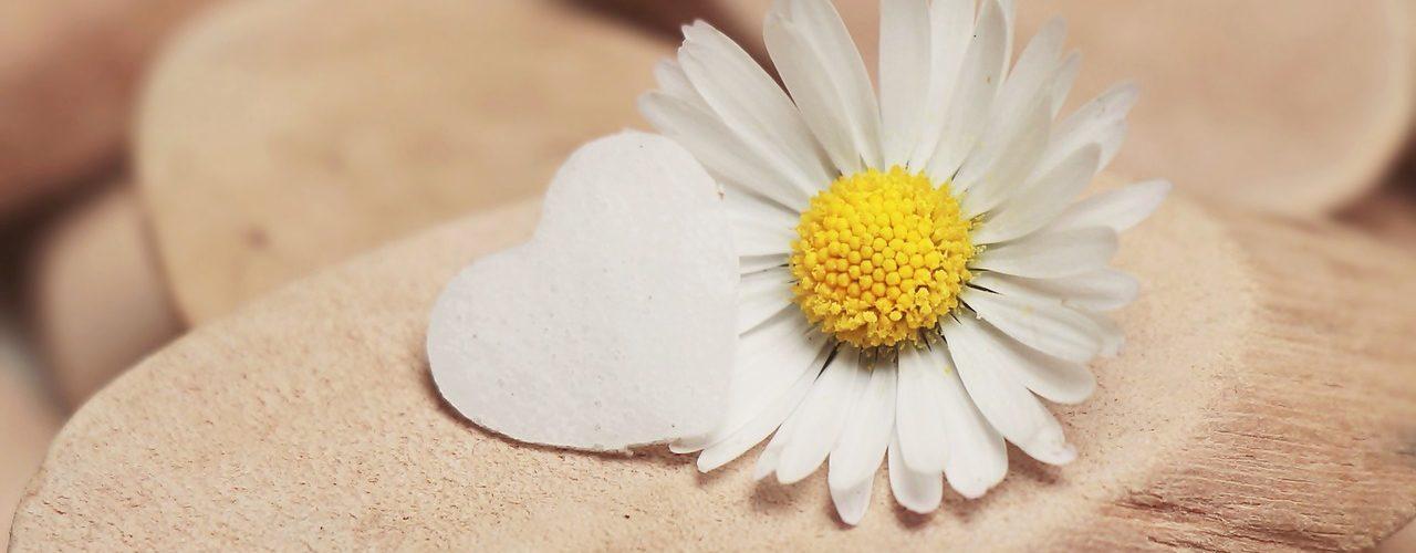 daisy-2314031_1280