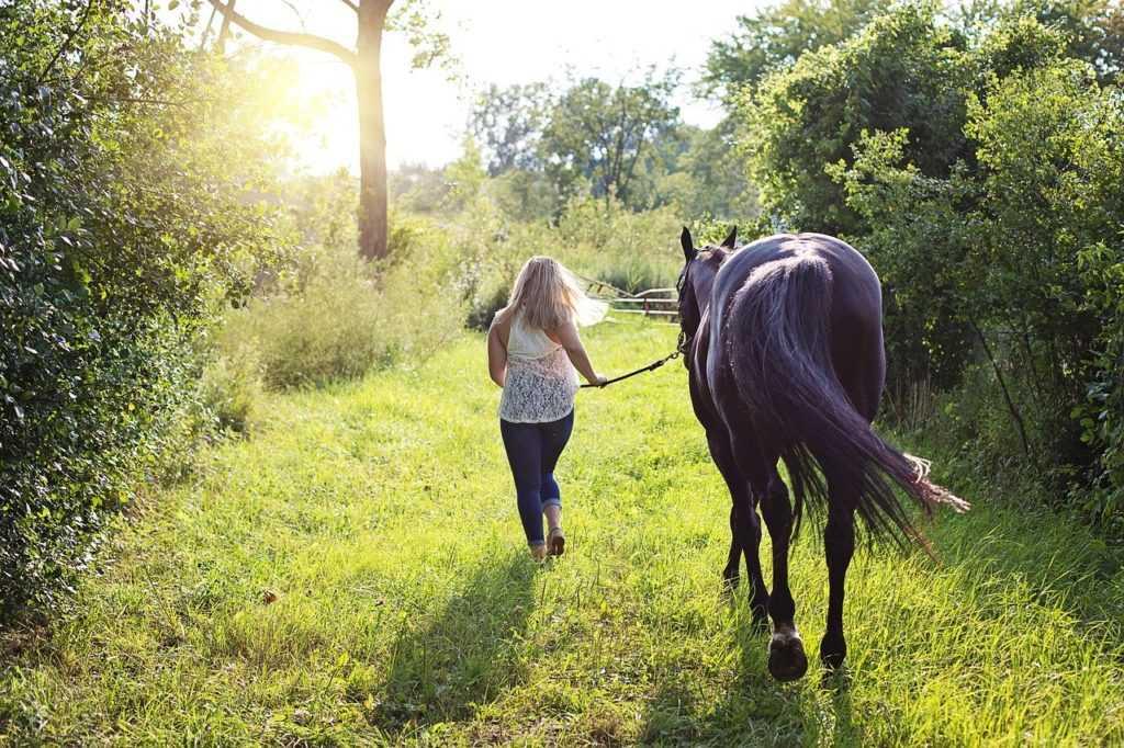 מכללת כרכור | חמישה דברים שניתן ללמוד מסוסים, הקריירה החדשה שלך כבר כאן