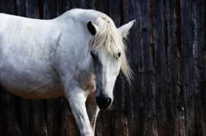 מכללת כרכור | הקשר בין סוסים לבין EMDR והתאוששות מטראומה