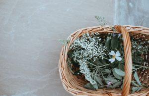 קורס ליקוט צמחים הוליסטי - מכללת כרכור, למטפלים שאוהבים להרגיש את הטבע