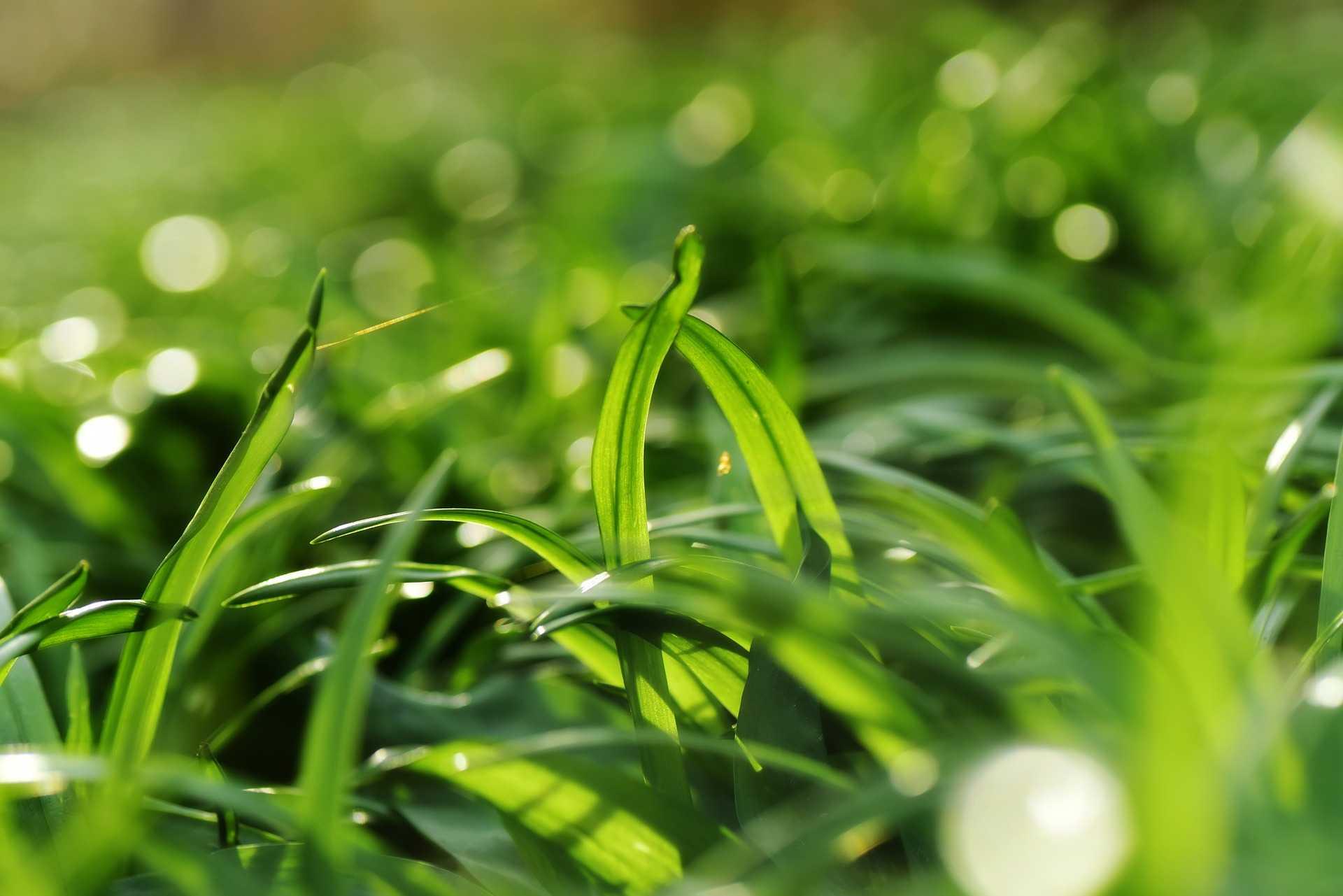 מכללת כרכור, אביב בגינה, ליקוט צמחים ליד הבית