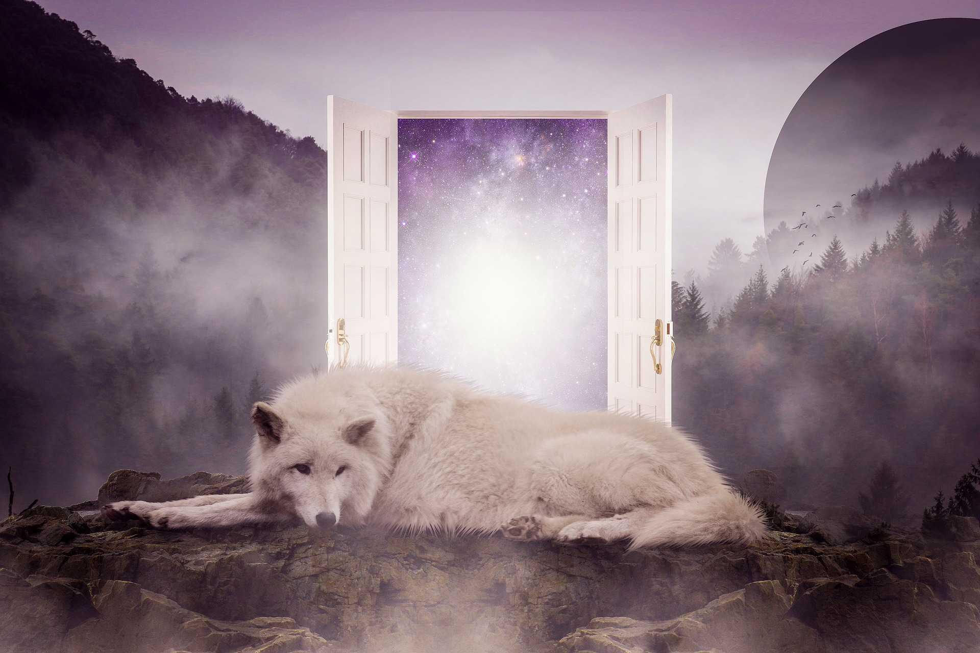 נשימה מודעת. לשחרר את הזאבה