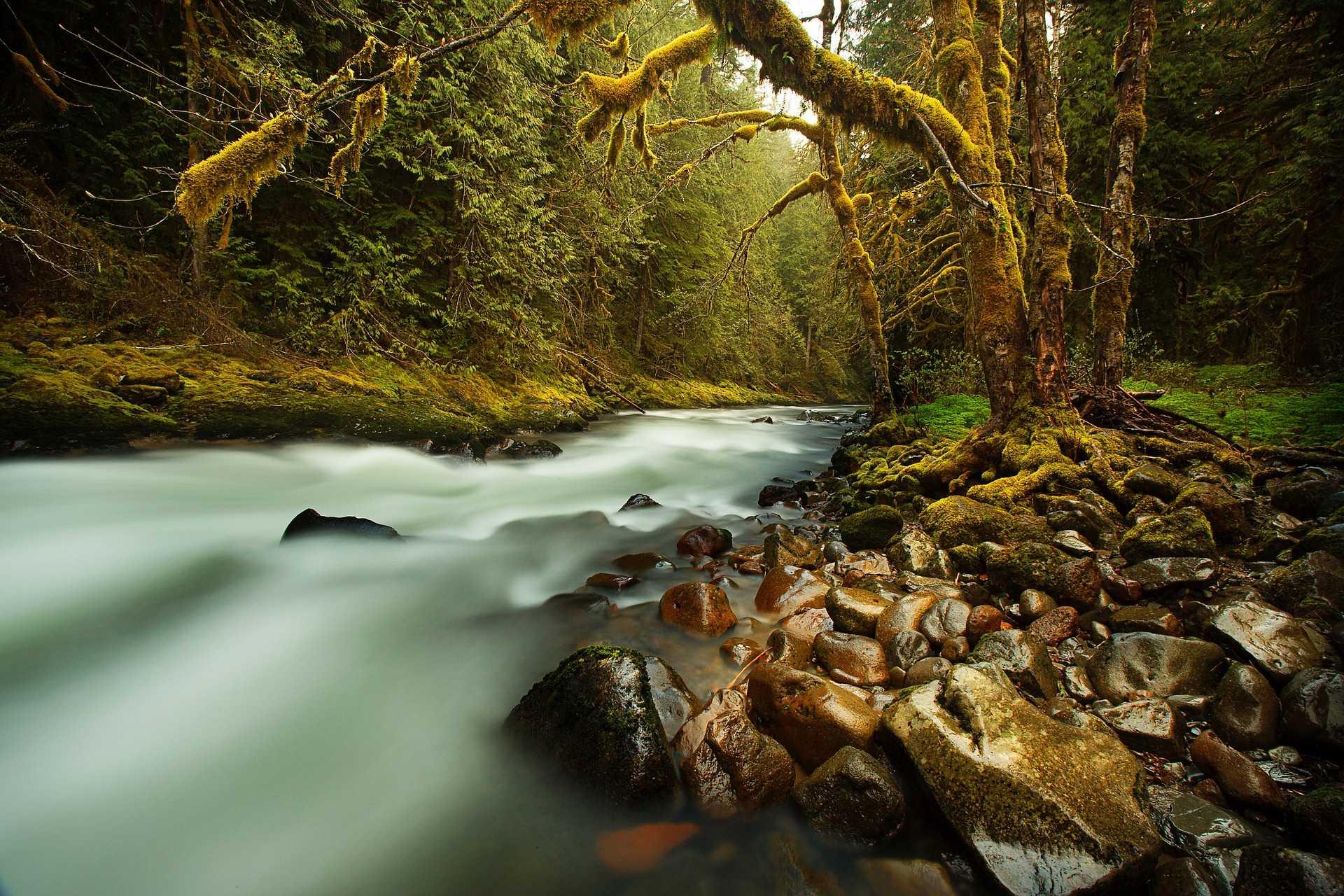 מכללת כרכור | להיות נהר, טל פנר משתף בחוויות וכוח הריפוי של הטבע