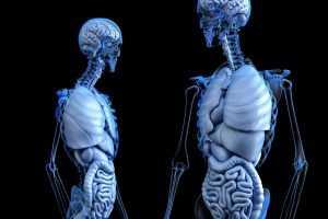 מכללת כרכור, לימודי רפואה אלטרנטיבית: סמליות האברים – התבוננות גופנית