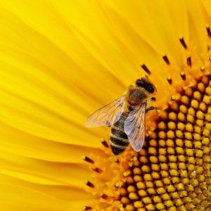 מכללת כרכור   פירות השמש, דקלה זיסמן מתארת איך יוצרים חיים אקולוגים