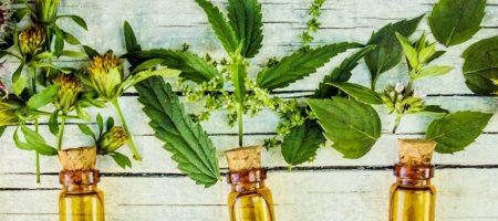 קורס צמחי מרפא, מתאים גם כקורס העשרה! מכללת כרכור, עושים הכל כדי שתצמחו